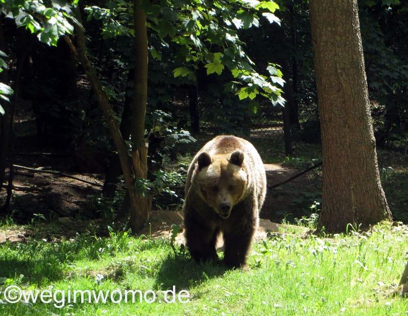 Ein weiterer Bär im Bärenwald Müritz